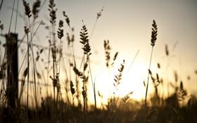 Картинка трава, макро, закат, забор