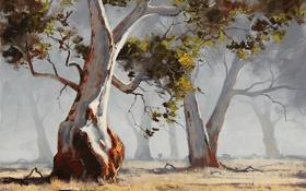 Обои artsaus, деревья, природа, арт, eucalyptus tree, солнечно