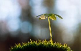 Обои трава, макро, природа, фотография, растение, росток, nature