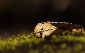 Картинка осень, макро, лист, жёлтый, сухой