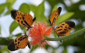 Обои цветок, бабочки, листва