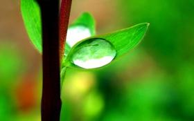 Обои зелень, свежесть, роса, веточка, капля, листик
