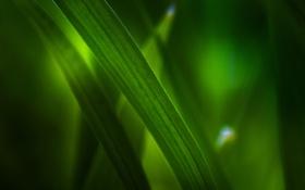 Картинка зелень, трава, макро, листва