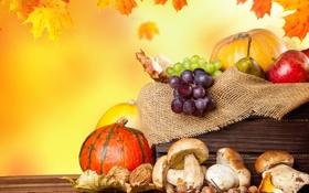 Картинка осень, листья, яблоки, грибы, урожай, виноград, тыквы