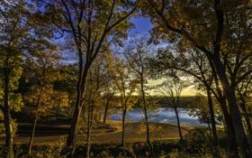 Картинка лес, деревья, парк, река
