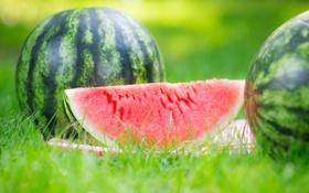 Обои природа, арбуз, grass, травка, nature, дольки, watermelon
