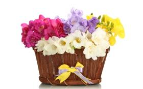 Картинка цветы, корзина, букет, бант, flowers, basket