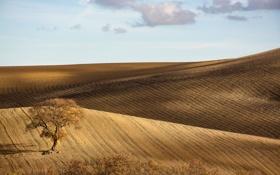 Обои поле, осень, дерево, холмы, Италия, Базиликата