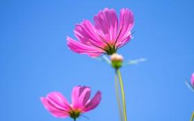 Обои луг, лепестки, небо, цветы