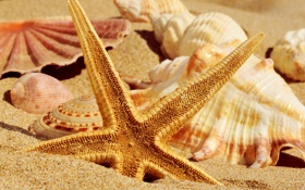 Картинка песок, лето, ракушки, морская звезда