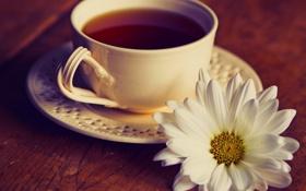 Обои цветы, чай, чашка, натюрморт, flowers, cup, still life