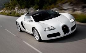 Обои белый, фон, красота, Bugatti, картинка