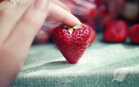 Обои макро, рука, клубника, ягода, пальны