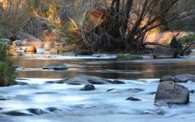 Картинка лес, деревья, река, камни, поток