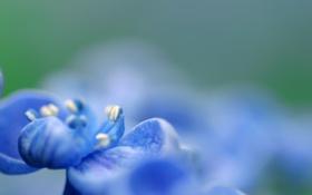 Картинка цветок, цвета, макро, синий, зеленый, голубой, фокус