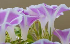 Картинка трава, цветы, природа, растение, лепестки