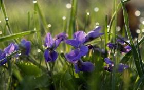 Обои зелень, трава, листья, солнце, капли, лучи, цветы