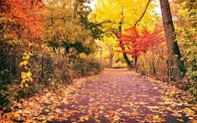 Картинка дорога, осень, листья, деревья, природа, город, парк