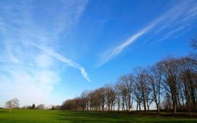 Обои зелень, поле, трава, солнце, деревья, пейзаж, природа