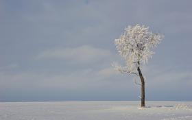 Обои зима, поле, дерево