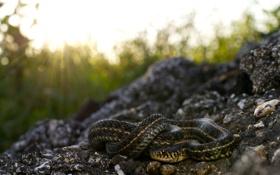 Картинка лучи, природа, камни, змея
