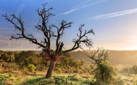 Картинка пейзаж, дерево, утро