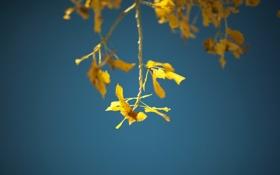 Картинка листья, макро, ветки, фото, обои для рабочего стола