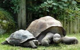 Картинка природа, семья, панцирь, черепахи