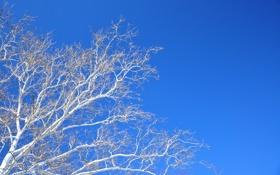 Обои ветки, небо, дерево