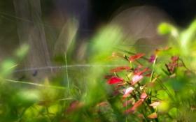 Картинка макро, природа, растения