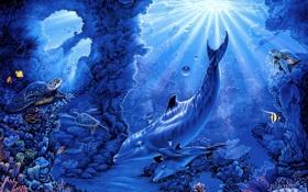 Обои лучи, рыбы, кораллы, арт, дельфины, морское дно, черепахи