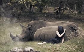 Обои девушка, носороги, ситуация
