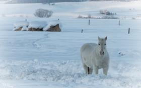 Обои зима, конь, природа