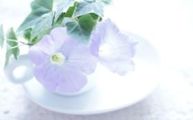 Картинка листья, цветы, чашка, блюдце, петунья