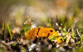 Обои макро, лист, блики, трава