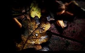 Картинка осень, асфальт, листья, капли