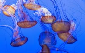 Обои море, океан, обои, медузы