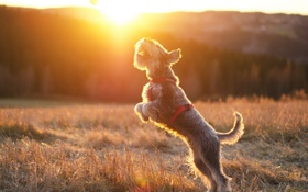 Обои солнце, собака, мячь