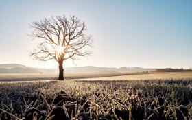 Картинка поле, свет, дерево, утро