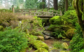 Картинка камни, трава, ручей, зелень, мох, кусты, деревья