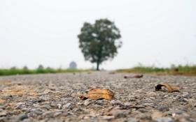 Картинка дорога, листья, пейзаж