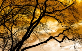 Обои небо, облака, дерево, силуэт