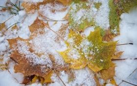 Картинка листья, макро, снег
