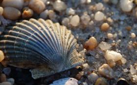 Обои песок, солнце, камни, ракушка, камушки