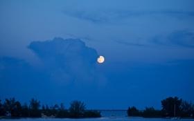 Картинка море, деревья, ночь, озеро, луна, яхта, залив