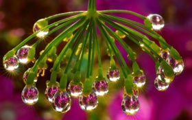 Обои капли, блеск, цвет, природа, отражение, зонтик, свет