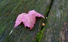 Обои красный, лист, капли воды, осенний