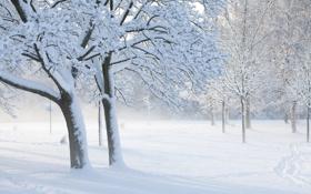 Картинка солнечный денёк, прохожий, деревья, след, иней, зима, снег
