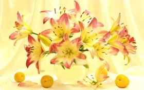 Обои лето, свет, лилии, букет, абрикосы
