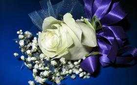 Обои лента, бантик, 8 марта, синий фон, белая роза